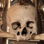 skull eating bone
