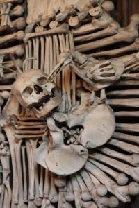 bone bird and skull