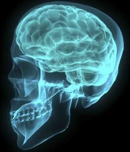 brain default mode meditation